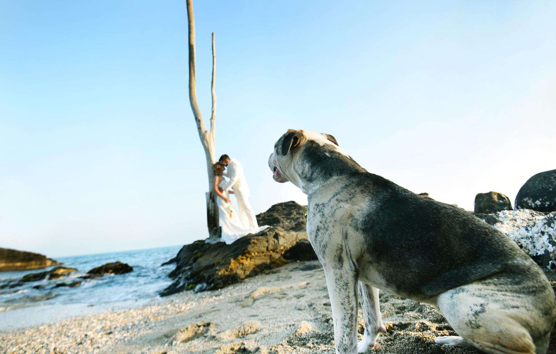 benalmadena wedding best photographers